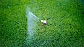 Insecticide de jet d'agriculteur dans la ferme de riz images stock