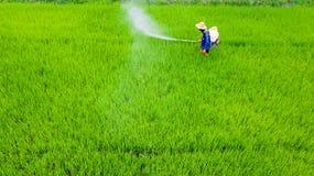 Insecticide de jet d'agriculteur dans la ferme de riz photographie stock libre de droits