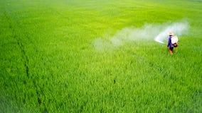 Insecticide de jet d'agriculteur dans la ferme de riz images libres de droits