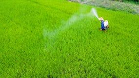 Insecticide de jet d'agriculteur dans la ferme de riz photo stock