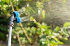insecticide de pulvérisation pour l'usine dans le jardin image libre de droits