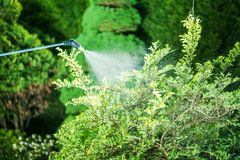 Insecticide in the Garden Stock Photo