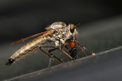 Insectivorous Meng Stock Image