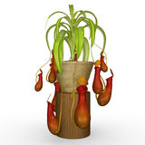 Insectivorous plants Stock Photography
