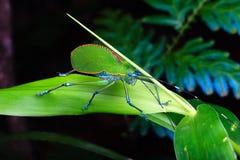 insecto Foto de archivo