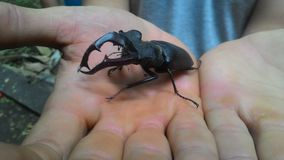 insecto Fotografía de archivo libre de regalías