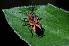 Insecto Imagen de archivo