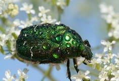 Insecto Imagenes de archivo