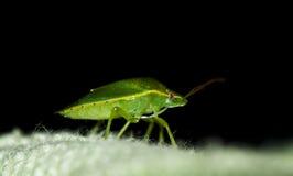 Insecto Fotos de archivo libres de regalías