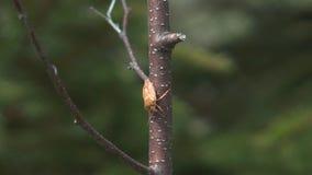 Insecto almacen de video