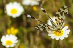 insecto Foto de archivo libre de regalías