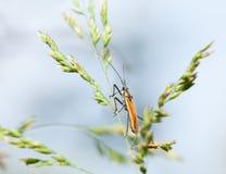 Insecto amarillo Imagenes de archivo