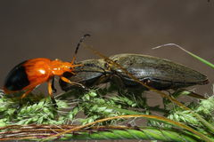 Insecto anaranjado Fotos de archivo