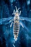 Insecto animal Imagen de archivo libre de regalías