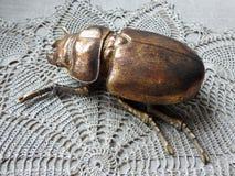 Insecto artificial de oro en superficie del ganchillo imagenes de archivo