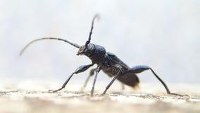 Insecto coloreado oscuridad almacen de metraje de vídeo