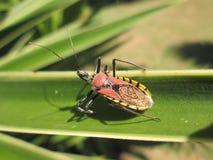 insecto colorido Fotografía de archivo