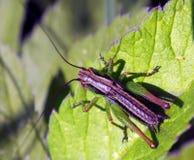 Insecto colorido en la hoja Fotos de archivo libres de regalías