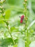 Insecto colorido en la planta Fotografía de archivo