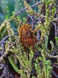 Insecto con alas en la planta suculenta Fotos de archivo