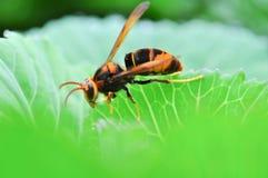 Insecto con la verdura verde Imagen de archivo