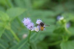 Insecto con las flores Imagen de archivo libre de regalías