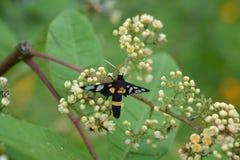 Insecto con las flores Imagenes de archivo