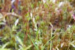 Insecto cubierto de musgo Foto de archivo