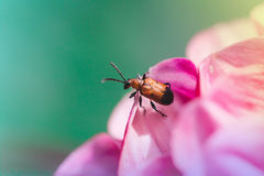 Insecto curioso Fotos de archivo