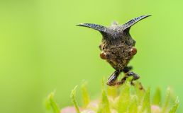 Insecto Dacca de Caterpillar Imagen de archivo libre de regalías
