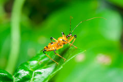 Insecto de asesino Fotografía de archivo