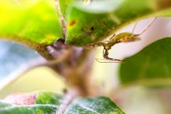 Insecto de asesino debajo de una hoja imagen de archivo libre de regalías