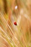 Insecto de hoja Fotografía de archivo libre de regalías
