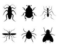 Insecto de la colección Imagen de archivo libre de regalías