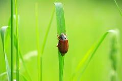 Insecto de la flor del espino Imagen de archivo