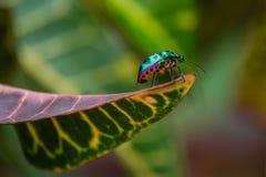 Insecto de la joya Fotografía de archivo libre de regalías