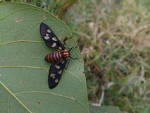 insecto de la planta Imágenes de archivo libres de regalías