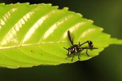 Insecto de vuelo en la hoja 4 imagenes de archivo