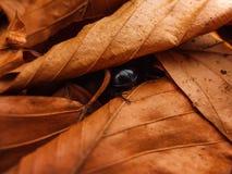 Insecto debajo de las hojas Foto de archivo