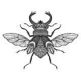 Insecto decorativo del bosquejo libre illustration