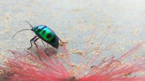 Insecto del arco iris foto de archivo