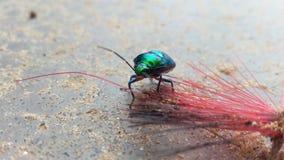 Insecto del arco iris nuevo fotos de archivo