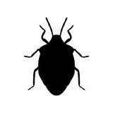 Insecto del escudo Prasina de Palomena Bosquejo del insecto del escudo Fotografía de archivo libre de regalías