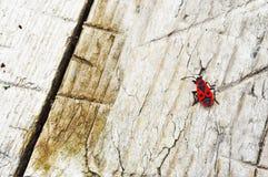 Insecto del Milkweed fotografía de archivo