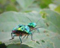 Insecto desconocido imagen de archivo libre de regalías