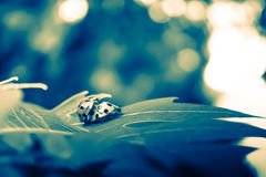 Insecto dramático de la señora de la boda Imagen de archivo