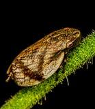 Insecto en hierba Imagen de archivo libre de regalías