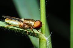 Insecto en hierba verde fotografía de archivo