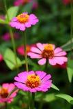 Insecto en la flor Imágenes de archivo libres de regalías