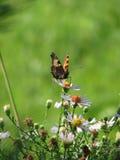 Insecto en la flor Imagenes de archivo
